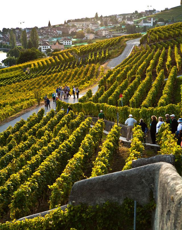 Lavaux Wine Region, Switzerland
