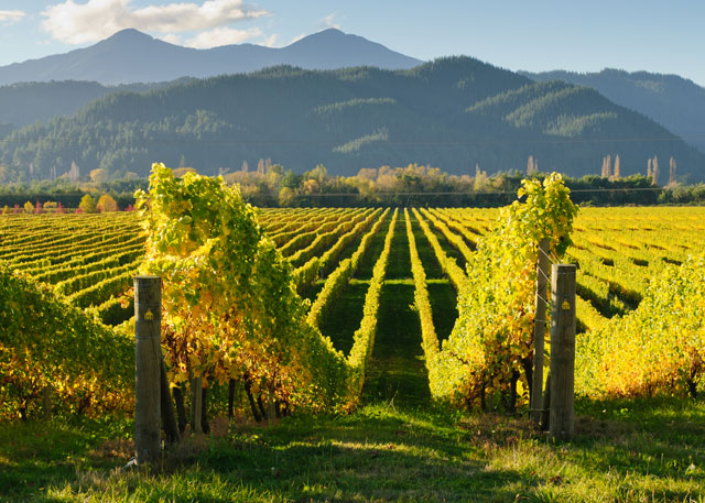 5 must-visit wine regions