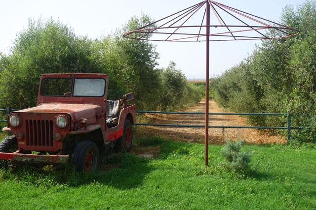 Olive grove, Cordoba, Spain