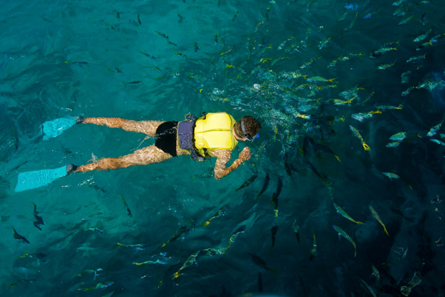 Australia Great Barrier Reef Snorkel