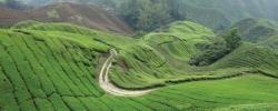 5 Reasons to visit Singapore & Malaysia