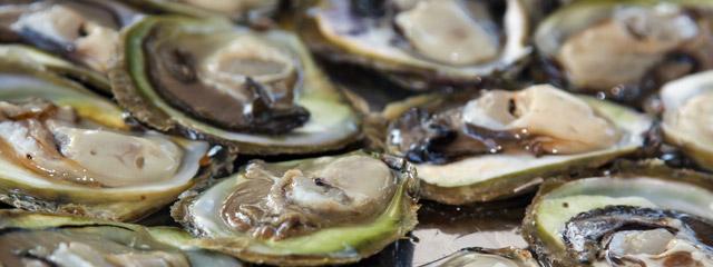 Seafood Oysters in Croatia