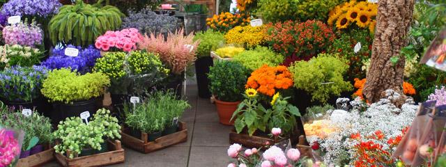 Aalsmeer Flower Market, the Netherlands