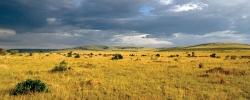 4 Kenyan wildlife & conservation organizations