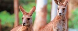 6 Unique Animals of Australia