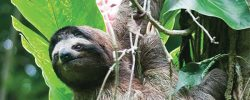 5 animals to see on a tour of Costa Rica