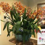 Springtime Orchids
