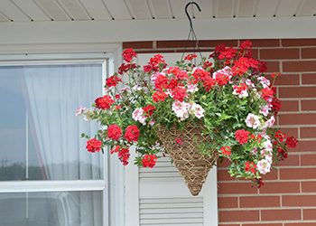 A hanging wicker planter with bright flowers in bloom
