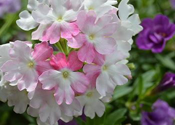 Exterior flowers in bloom