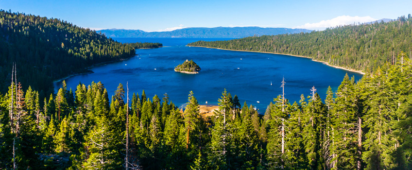 Large, lush pine trees surrounding a large body of water