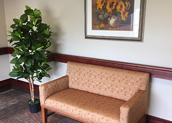 A couch beside an indoor tree.