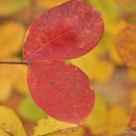 The Colors of Autumn
