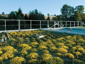 picture from Centre for the Advancement of Green Roof Technology