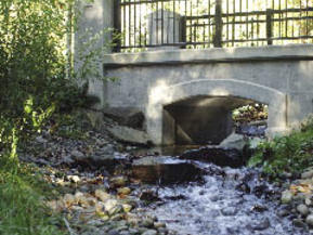 picture from BC Hydro Salmon Stream