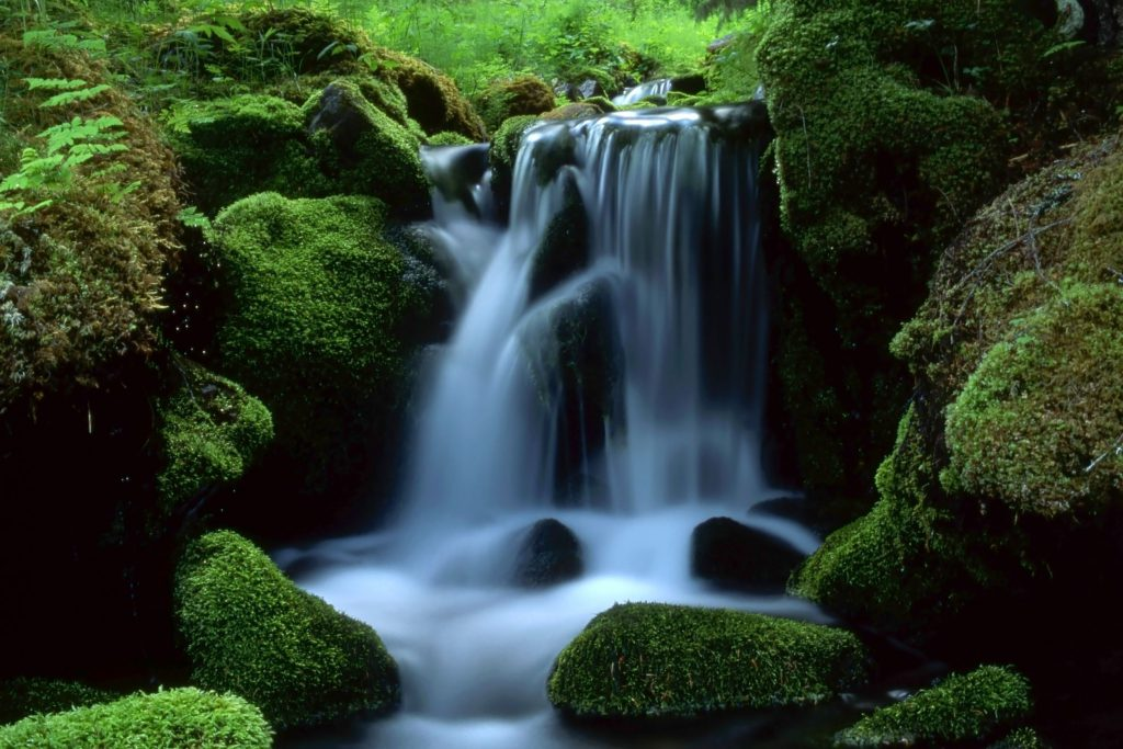 camping-flowing-stream-mossy-rocks