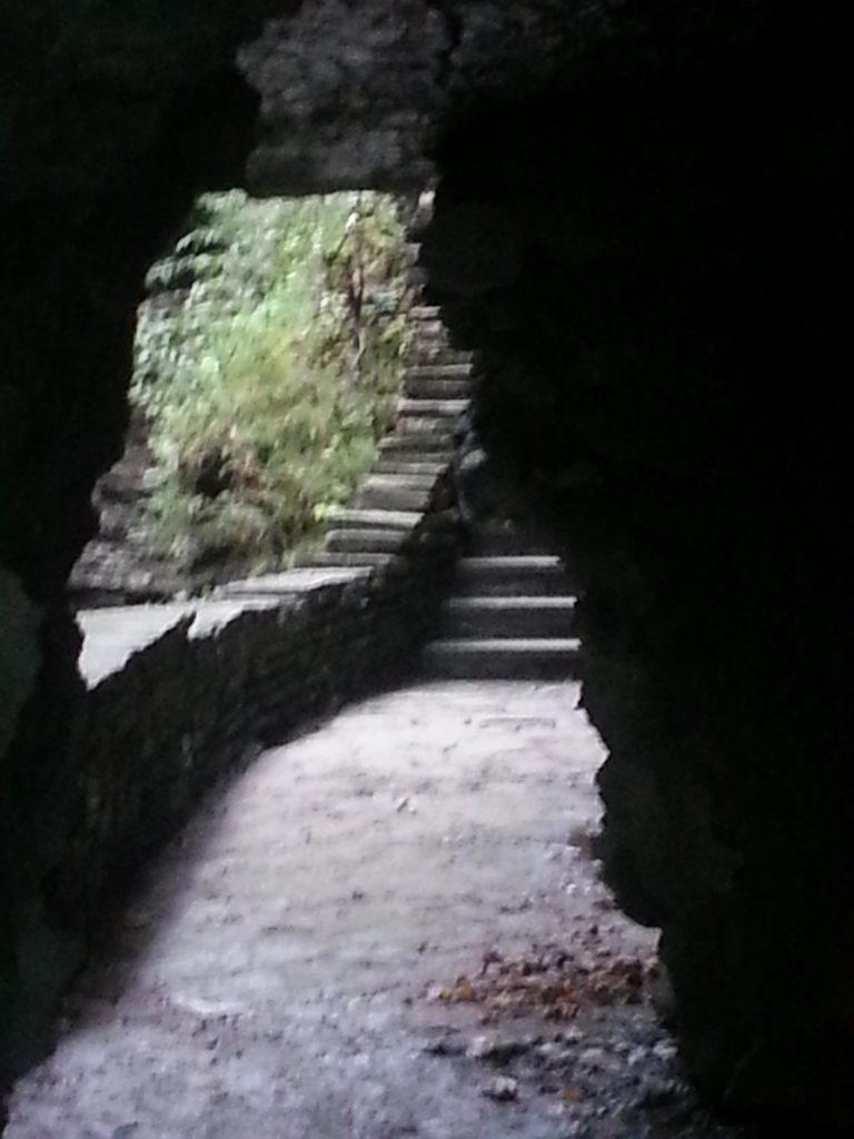 older-adult-path-ahead