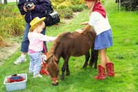"AA Ponies ""R"" Us & Mobile Petting Zoo"