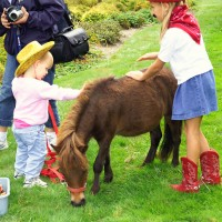 "AA Ponies ""R"" Us & Mobile Petting Zoo - Pony Party / Children's Party Entertainment in New Boston, Michigan"