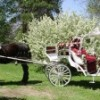 Abraham's Carriage Service