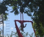 Silks at a picnic