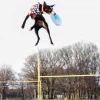 Americas Best Frisbee Dogs LLC - Circus Entertainment in Holland, Michigan