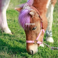 Lilly's Ponies - Pony Party / Petting Zoos for Parties in Holly Springs, North Carolina