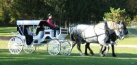 Andrusz Carriage Service - Pony Party in Buffalo, New York
