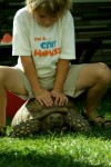 "Our 60 lb Tortoise ""Chibi"" Will Take You For a Ride"