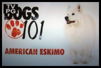 Atka, the AMAZING Eskie!