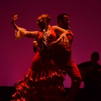 Baila Flamenco - Fine Artist in ,