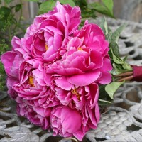 BB's Weddings & Events - Event Florist in ,