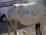 Paint the Pony