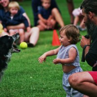 Border Collie International Performing K-9 Team - Sports Exhibition in Spokane, Washington
