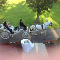 Carefree Carriage LLC - Horse Drawn Carriage / Limo Service Company in Montgomery, Louisiana