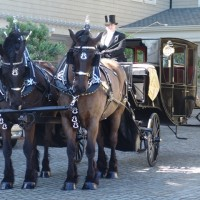 Carriage De Corriere - Horse Drawn Carriage in Sacramento, California