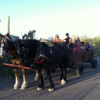 Cheyene Crossing Wagon Rides - Horse Drawn Carriage in Queen Creek, Arizona