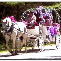 CHF Carriage Company - Princess Party in Montreal, Quebec