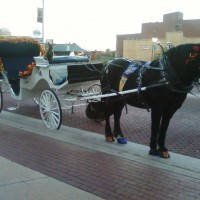 Clippity Clop Carriage - Horse Drawn Carriage in Tulsa, Oklahoma
