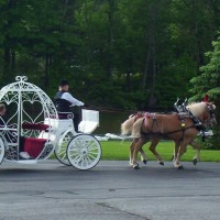Colonial Acres Carriage Service - Horse Drawn Carriage in Norwalk, Ohio