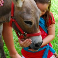 Critter  Caravan - Pony Party in Boca Raton, Florida