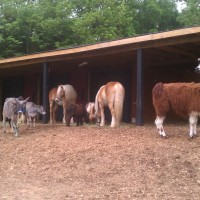 Darby Acres Farm - Petting Zoos for Parties in Charlotte, North Carolina