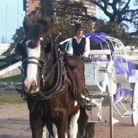 Die Gelbe Rose Carriage - Limo Services Company in Seguin, Texas