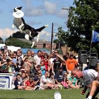 Disc-Connected K9s - Circus Entertainment in Jacksonville, Florida