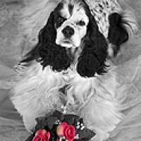 DogBreedz.net Pet Photography - Portrait Photographer in Chula Vista, California