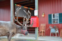 Double R Reindeer Ranch