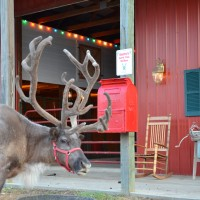 Double R Reindeer Ranch - Santa Claus in Southlake, Texas