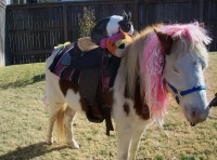 Dreamcatcher Party Ponys - Pony Party in Tulsa, Oklahoma