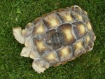 We bring small or large tortoises to any event