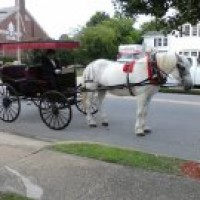 Fantasy Fun Carriage - Horse Drawn Carriage in Eden, North Carolina