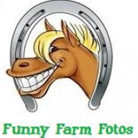 Funny Farm Fotos - Horse Drawn Carriage in Evansville, Indiana